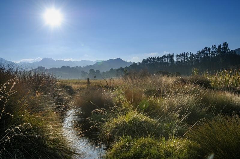 Landscape photo creek Tairua River Coromandel Peninsula New Zealand