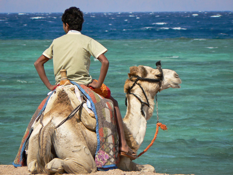 egyptian-boy-camel-sinai-child-photography-tips