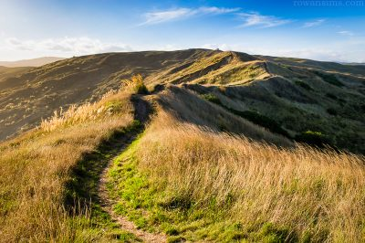Canvas print of walking track over hills of Castlepoint Wairarapa New Zealand