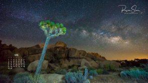 The Milky Way and stars over Joshua Tree National Park at night, California, USA