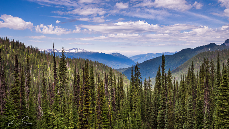 View of trees and mountains from a hiking trail in Mount Revelstoke National Park, BC, Canada
