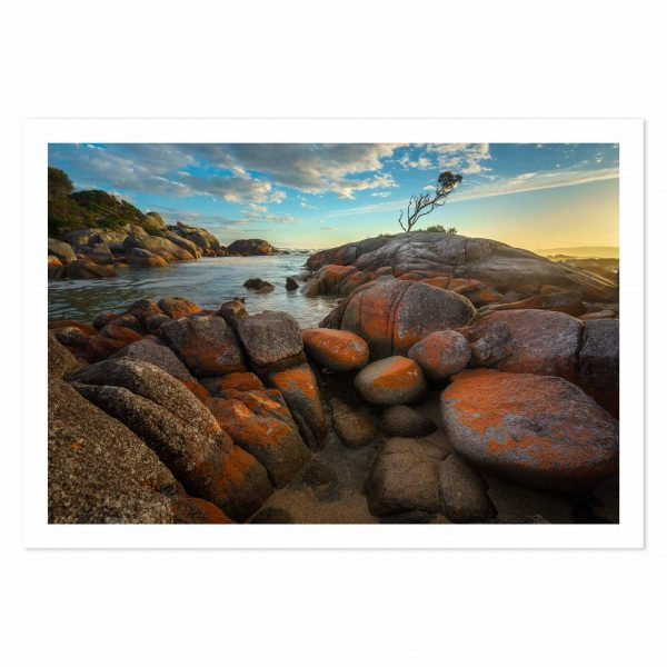Photo print of Sunrise at Lone Tree, Binalong Bay, Bay of Fires, Tasmania, Australia.