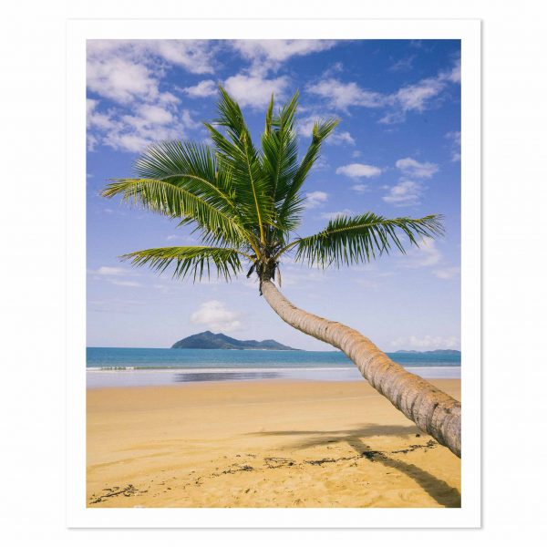 Photo print of a Palm Tree and Dunk Island, Mission Beach, Cassowary Coast, Tropical North Queensland, QLD, Australia.